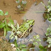 江西青蛙养殖