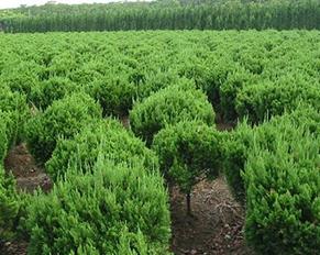 哈尔滨苗木基地——园林绿化
