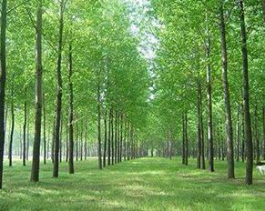 哈尔滨苗木基地——苗木