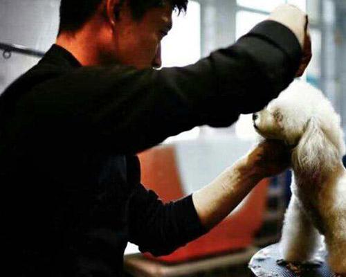 宠物美容培训会馆