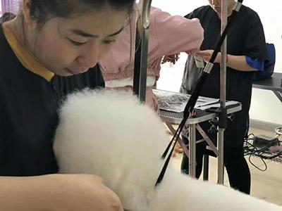 宠物造型培训