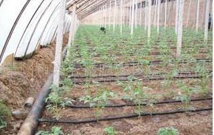 新型大棚节水灌溉产品微灌