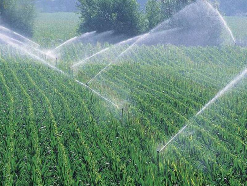【多图】喷灌带节水方法讲解 喷灌带如何使用