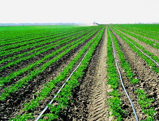 【全】滴灌带喷头组距标准 潍坊微灌带有什么优势