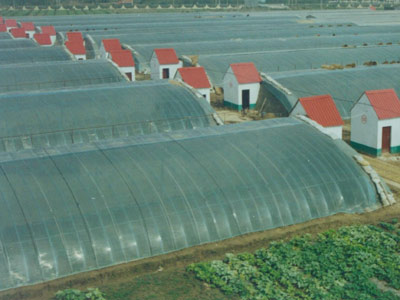 日光温室大棚造价