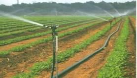 温室大棚蔬菜种植新技术