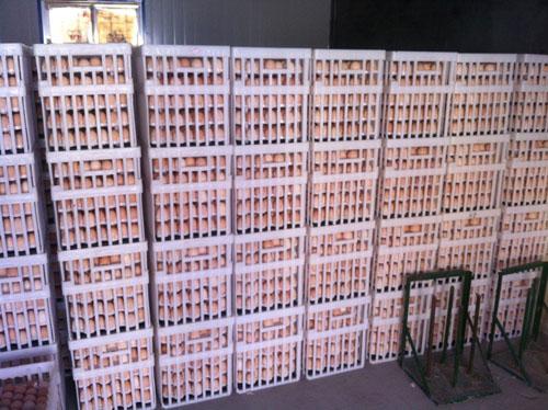 鸡苗运输箱厂家销售