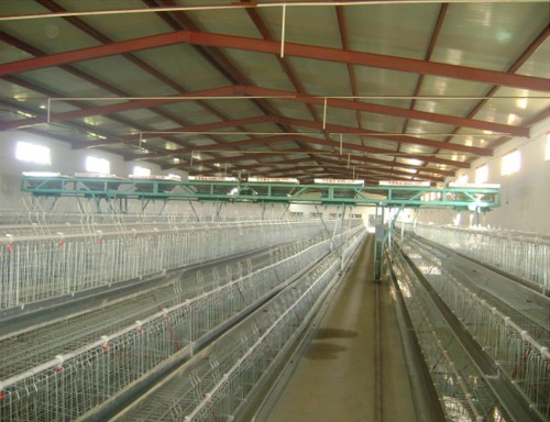 【图文】蛋鸡养殖设备安装方案_蛋鸡养殖设备厂家提示早春养殖方案