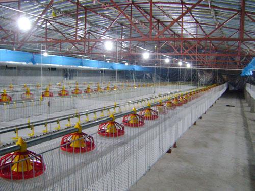 肉鸡养殖设备厂家