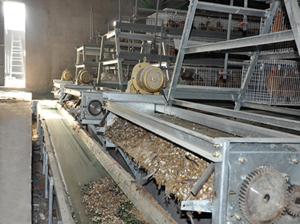 【优选】养鸡设备清粪机是怎么加工的 养鸡设备重点保养哪些地方