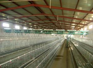 蛋鸡自动给料机厂家
