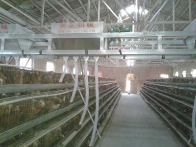 蛋鸡上料机厂家