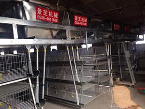 【盘点】养鸡机械要重视其养殖密度 养鸡机械配置很重要