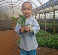 非洲菊种苗