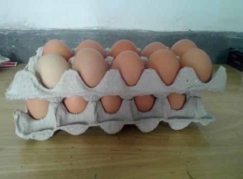 15枚蛋托礼品盒
